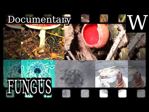 FUNGUS - Documentary
