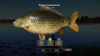 Русская рыбалка 4 RF4 Янтарное Карп на клубнику трофеи