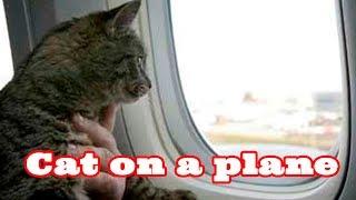 Перелет кошки. Россия-Швейцария. Cat on a plane.