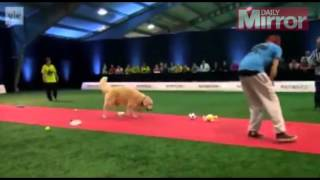 Watch World's Worst Racing Dog Embarrass Its Owner During Finland #039;s Crufts Competition   M