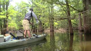 Kayak Bowfishing in the Swamp