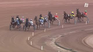 Vidéo de la course PMU PRIX DE GOLEGA