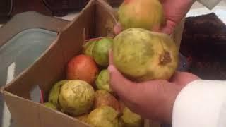 بالفيديو..الإطاحة ببائع يغش في الفاكهة بالطائف