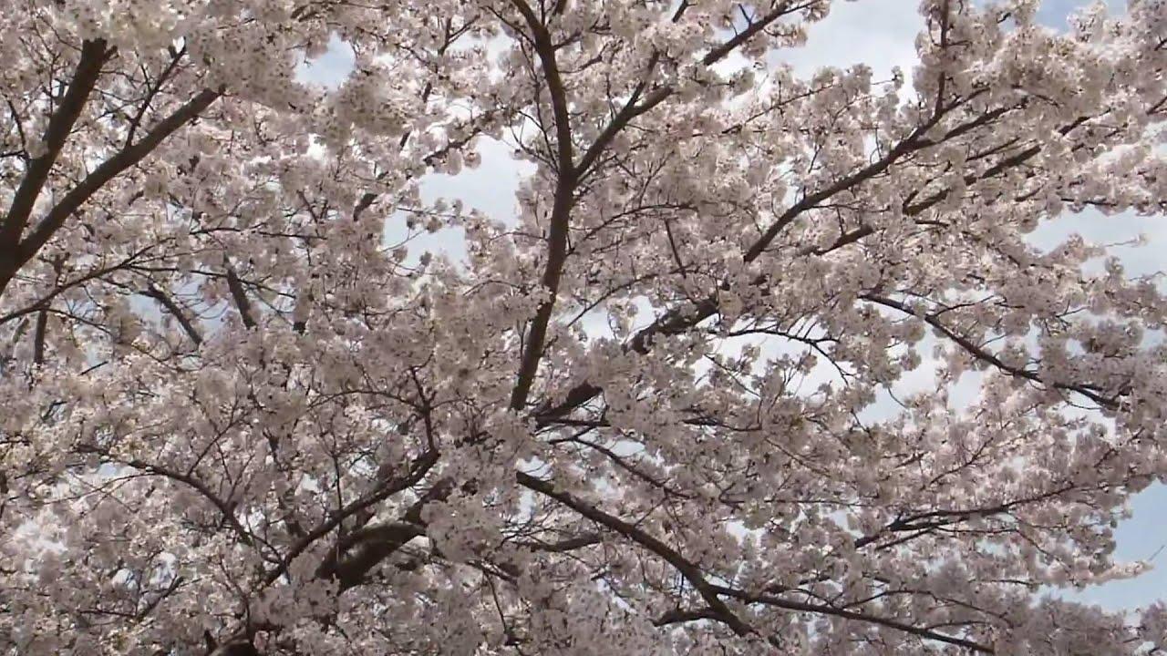 五月なみ早春賦投稿画像65枚& satsuki nami五月なみ14歳