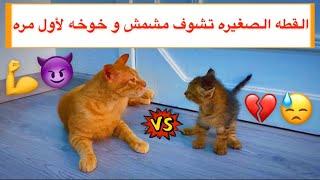 القطه الصغيره الجديده تتعرف على مشمش و خوخه 😍 شوفوا ايش صار معهم 😱💔 / Mohamed Vlog