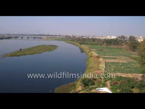 Aerial view of Yamuna river in Delhi: fly over cultivation and polluted waters