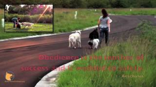 Off-leash Dog Obedience Training (naples, Fl And Fort Myers, Fl Areas) With Fine-tuned Canines