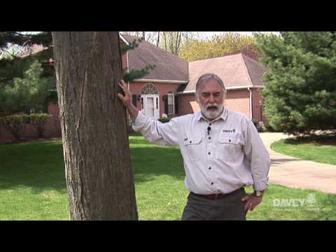 Tree Laws: Tree on Property Line, Who is Responsible?