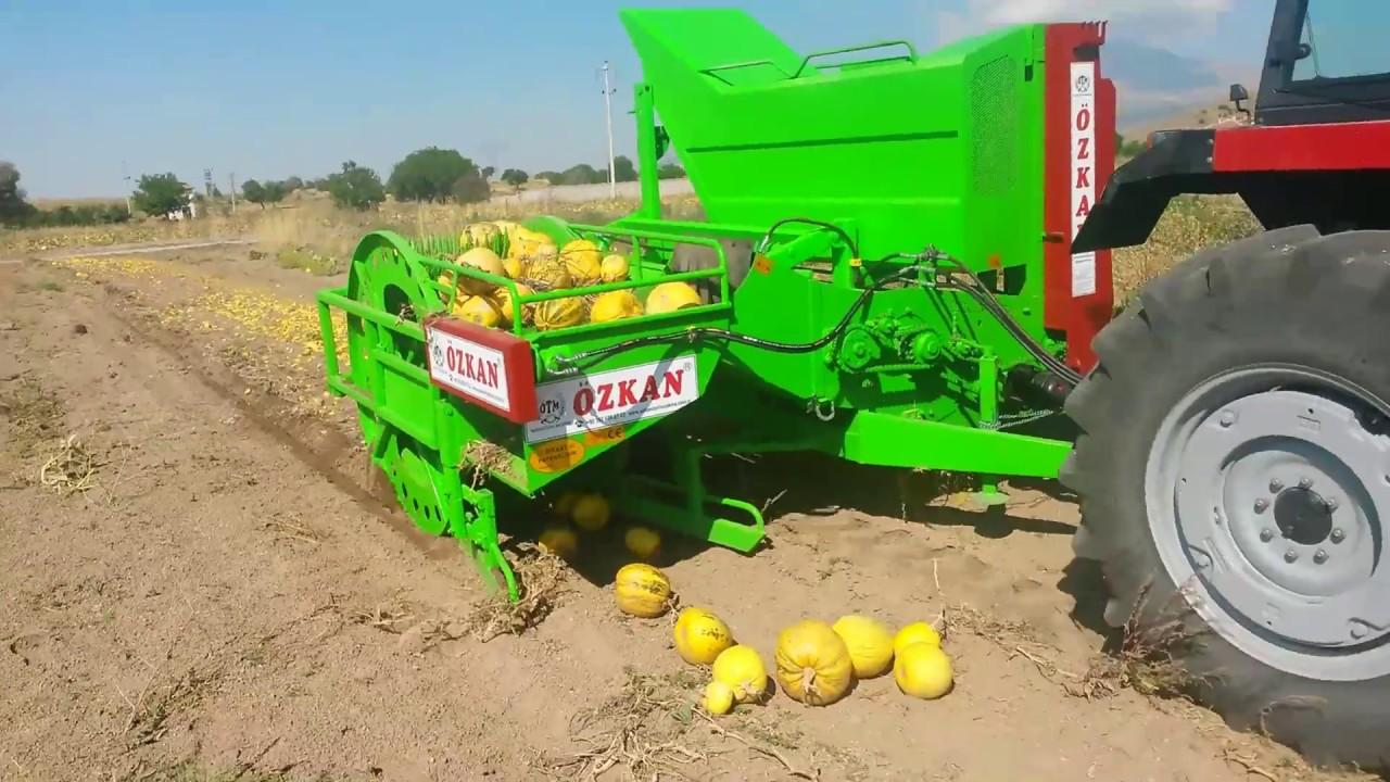 automatic pumpkin seed harvesting machine kabak cekirdegi hasat makinesi ozkan tarim