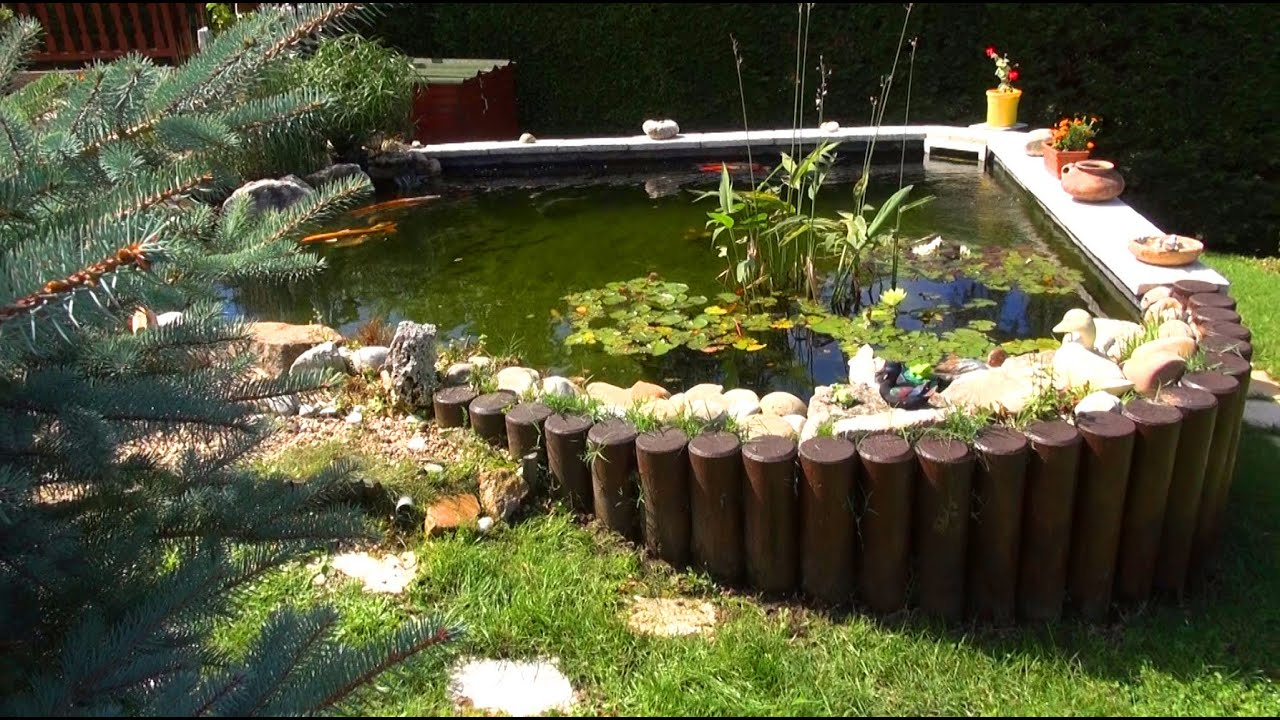 Le bassin de gilbert lissieu 69380 d couverte aquatique youtube for Bassin de jardin algues vertes