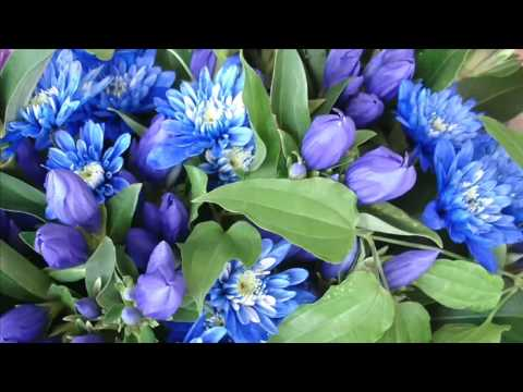 Mendelssohn: Violin Concerto In E Minor, Op. 64 - 1