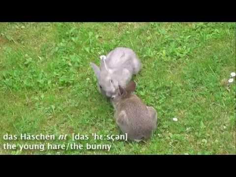 Animals: Das Kaninchen (The Rabbit) - Learn German easily
