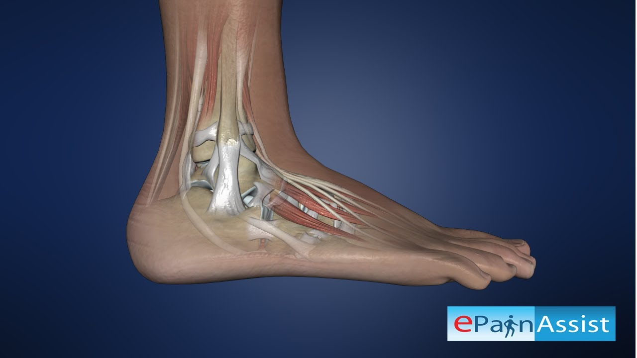 Ankle Joint Anatomy Explained: Bones, Joints, Ligaments, Tendons ...