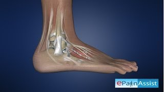 Ankle Joint Anatomy Explained: Bones, Joints, Ligaments, Tendons- Anterior, Posterior