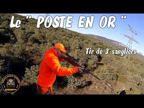 Tirs de 3 sangliers en battues :POSTE EN OR /wild boar hunting