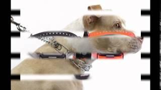 Купить GPS ошейник для собаки.