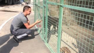Нашелся хозяин потеряшки курцхаарши!!! Месяц собака ждала его в харьковском городском приюте