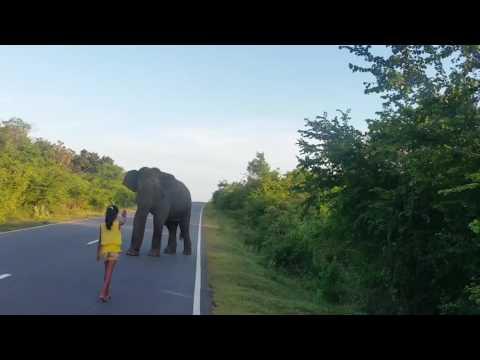 Little Girl Control Wild Elephant