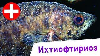 Ихтиофтириоз - Тайны и разоблачения. Заболевания аквариумных рыб