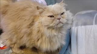 RVFall Trip ~ ** WARNING ** For Fans ~RV Cats Back in Da Yoop