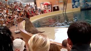 дельфинарий (морж качает прес)!(, 2011-12-21T08:01:48.000Z)