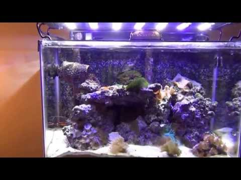 Marineland Reef Capable Led Lighting For Saltwater Aqua