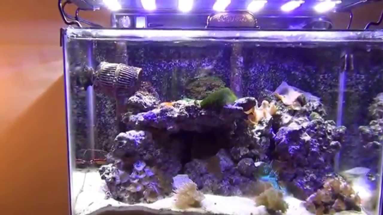 Marineland Reef Capable LED Light Review - YouTube