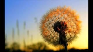 Chicane - Dandelion (new 2016 Chicane track) Saltwater/Going Deep/Poppiholla/Offshore