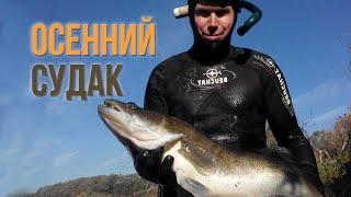 Подводная охота. Особенности подводной охоты на Судака в реке(Подводная охота. Особенности поведения судака в реке, зависимость его активности от сезона и погоды. Судак..., 2016-04-13T12:28:59.000Z)