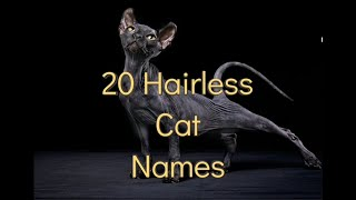 20 Hairless cat names |10 female and 10 male names for your hairless kitty