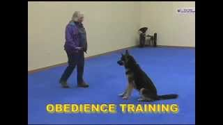 Dog Boarding Atlanta Ga - Park Pet Retreat Training Academy