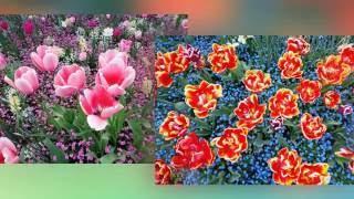 Мелодия цветов Греции. Фильм 2.(Фильм рассказывает о редко встречающихся цветах в Греции: синие розы и гартензии, орхидеи, разноцветные..., 2016-10-11T20:28:18.000Z)