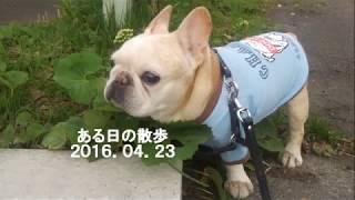 フレブルの老犬タロウ12歳の時です。 2016.04.23 Facebook:...
