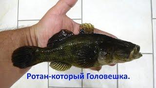 Ротан. Підлідна відео зйомка.Сезон 2015-2016 р.