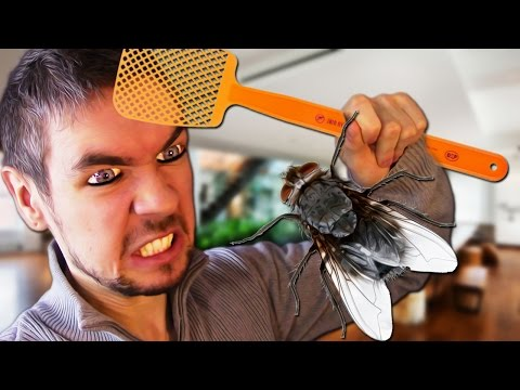 DIE YOU DAMN FLY! | Fly In The House