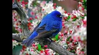 мир животных(птицы)