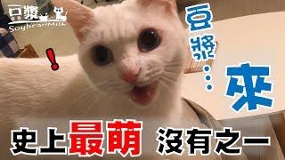 【豆漿 - SoybeanMilk】豆漿 過來!!