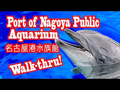 [HD] 名古屋港水族館 The Nagoya Port Aquarium - Walk-thru