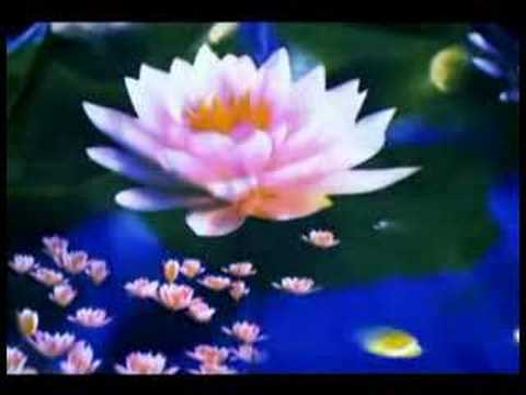 Zen And The Lotus Blossom Zen Moments