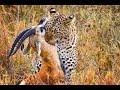 Vida salvaje  El Serengueti, la gran aventura africana, Grandes documentales