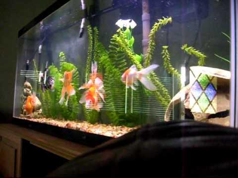 My 55 gallon fish tank youtube for My fish tank