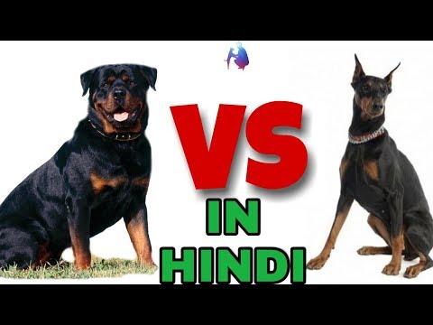 Rottweiler dog vs Doberman dog in Hindi