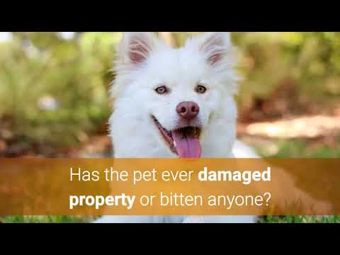 Should You Invest in Pet Friendly Apartments | Insurance by Castle