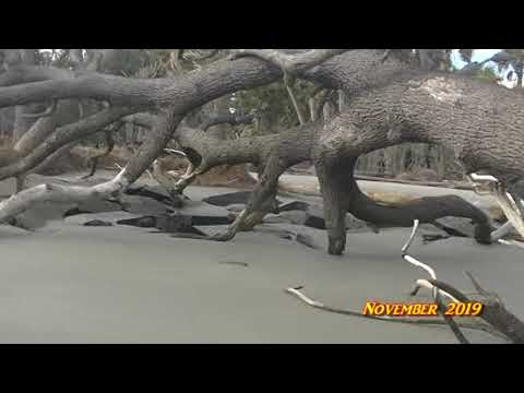 Hunting Island State Park Update Chapter 1B