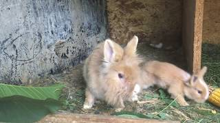 Little Bunny THE CUTEST VIDEO EVER, Rabbit - A Funny And Cute Bunny Videos