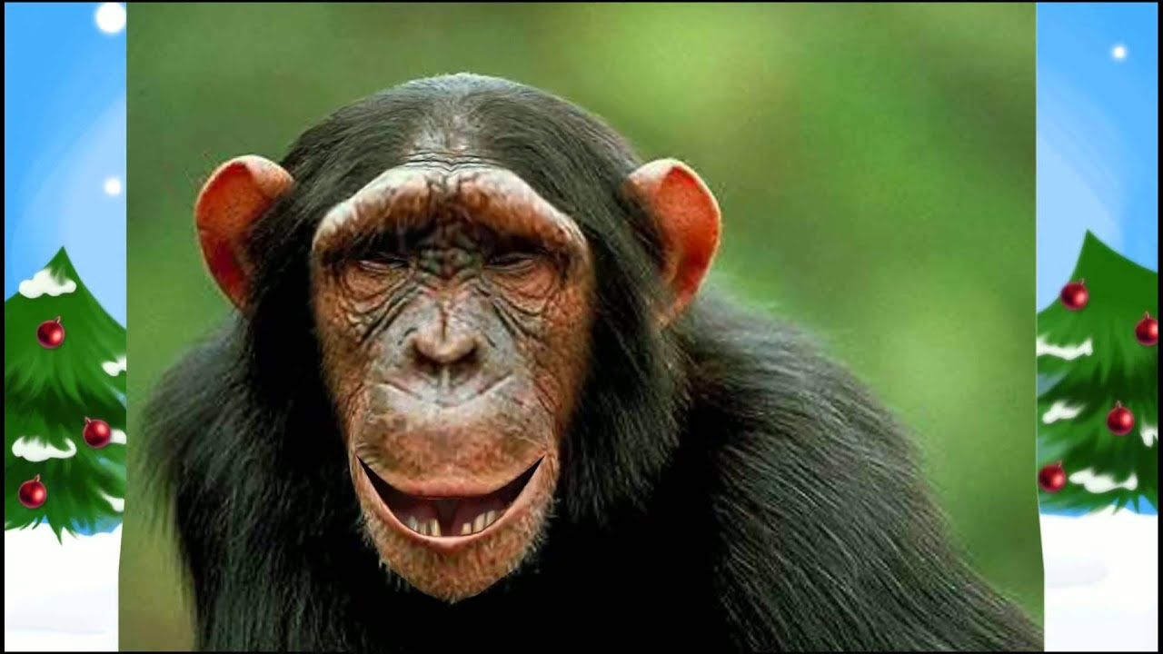 Открытка с поющими обезьянами