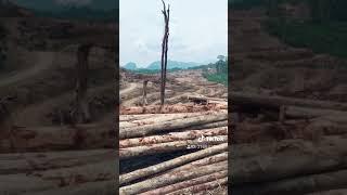 【抖音 til tok】travel or down nice view from logging camp