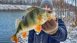 ИКРЯНЫЕ - ЗИМНИЕ - ТОЛСТЫЕ ОКУНИ! Зимняя рыбалка на спиннинг с берега