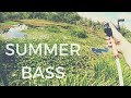 Summer Bass Fishing Punching Grass and Pads