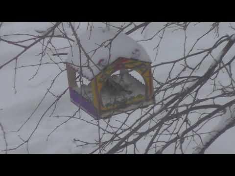 Кормушка для птиц,синицы,обзор города РОССОШЬ